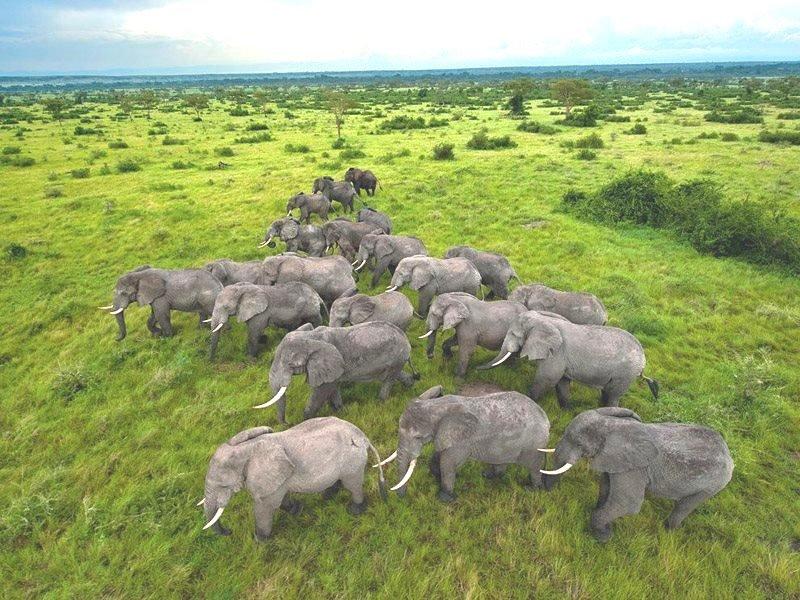 ღმერთმა შექმნა ცხოველთა სამყარო