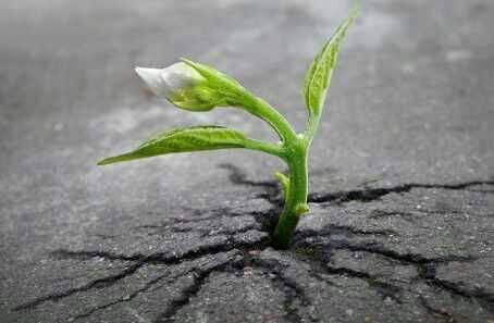 რწმენით ცხოვრება
